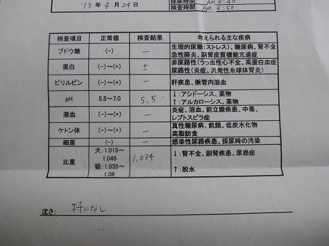 コピー ~ IMG_0731.JPG